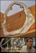 Jaws original movie prop