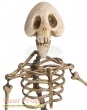 The Corpse Bride  Tim Burtons original movie prop