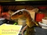 Jurassic Park 2  The Lost World made from scratch model   miniature