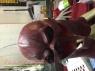 The Flash replica movie costume