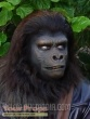 Planet of the Apes made from scratch make-up   prosthetics
